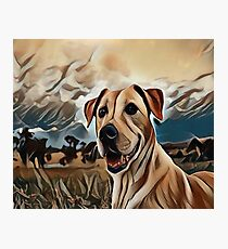 The Rhodesian Ridgeback Photographic Print