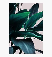 Palm Leaves 4 Photographic Print