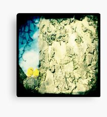 Chicks in a tree Canvas Print