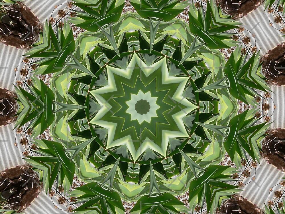 Kaleidescope - Plant life by Sandra Chung
