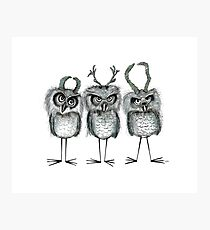 owls with horns Photographic Print