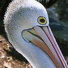 Pelican 2 by Janine  Hewlett