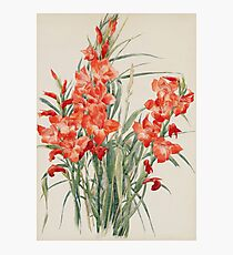 Charles Demuth - Red Gladioli1928 Photographic Print