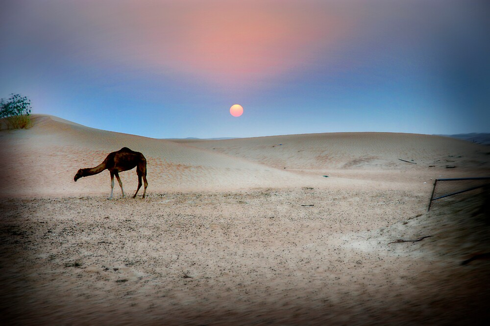 Desert colours by Simon Mitrovich