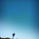 Blue Sky Tree by Gavin