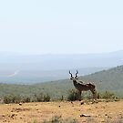 King Kudu by Antionette