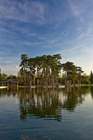Bois de Boulogne by Julien Tordjman
