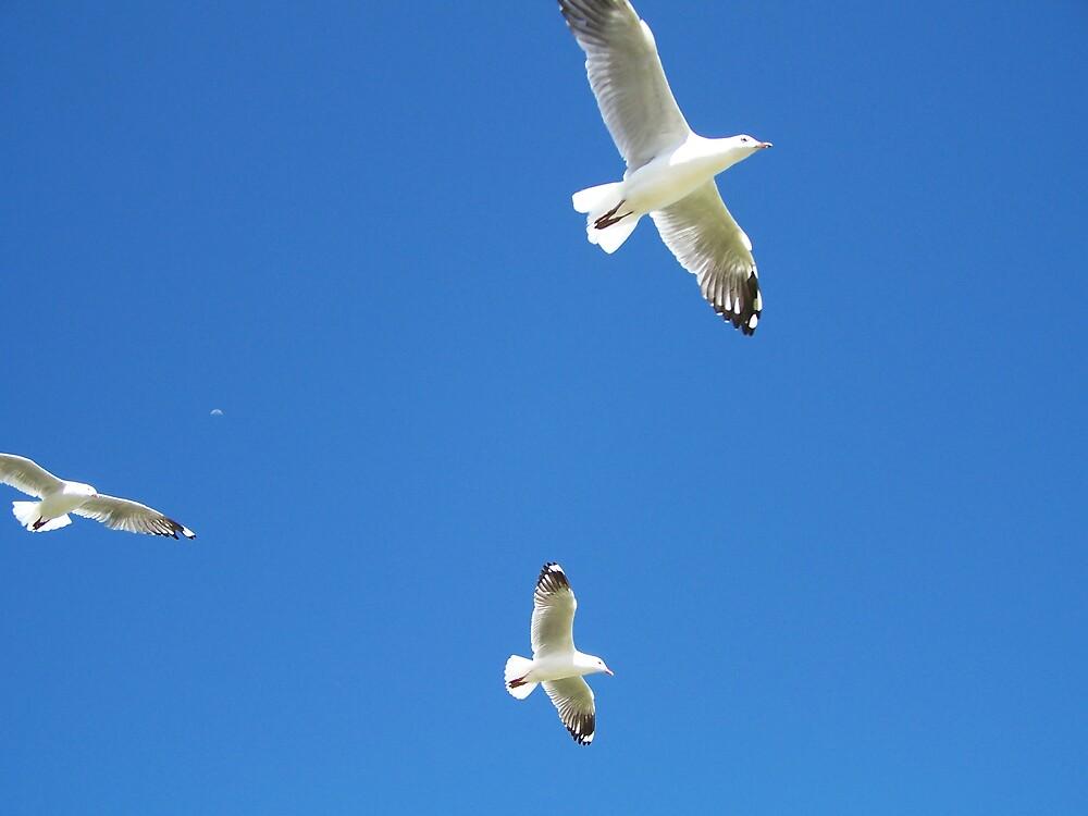 Fly by Princessbren2006