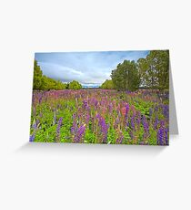 Lupin River Greeting Card