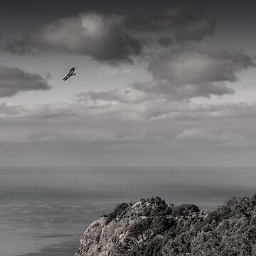 Flight of the Kestrel by garethedward