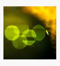 Citrus Tree Photographic Print