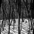 Lines by Andrej Grznár
