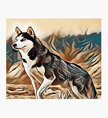 The Siberian Husky Photographic Print