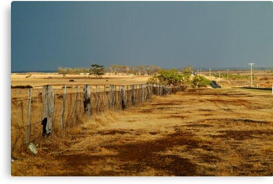 Country Road,Rural Geelong by Joe Mortelliti