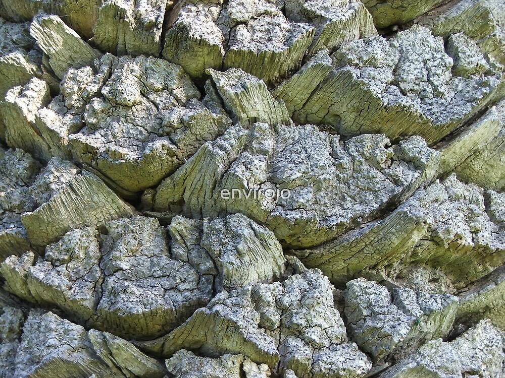 Bark texture by envirojo