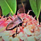 Assassin bug on magnolia pod by ♥⊱ B. Randi Bailey