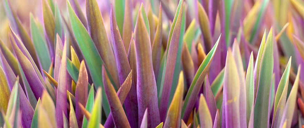 Grass One by Stuart Hazeldine