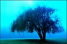 Willow tree blue by Juilee  Pryor