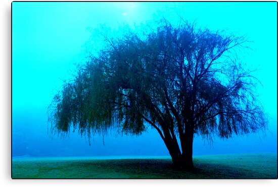 Willow tree blue by Juilee  Pryor