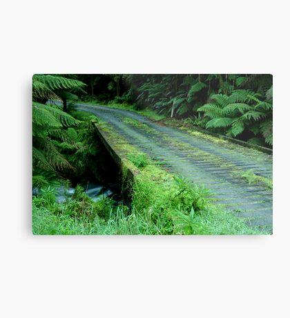 Cianco Creek,Otway Ranges Metal Print