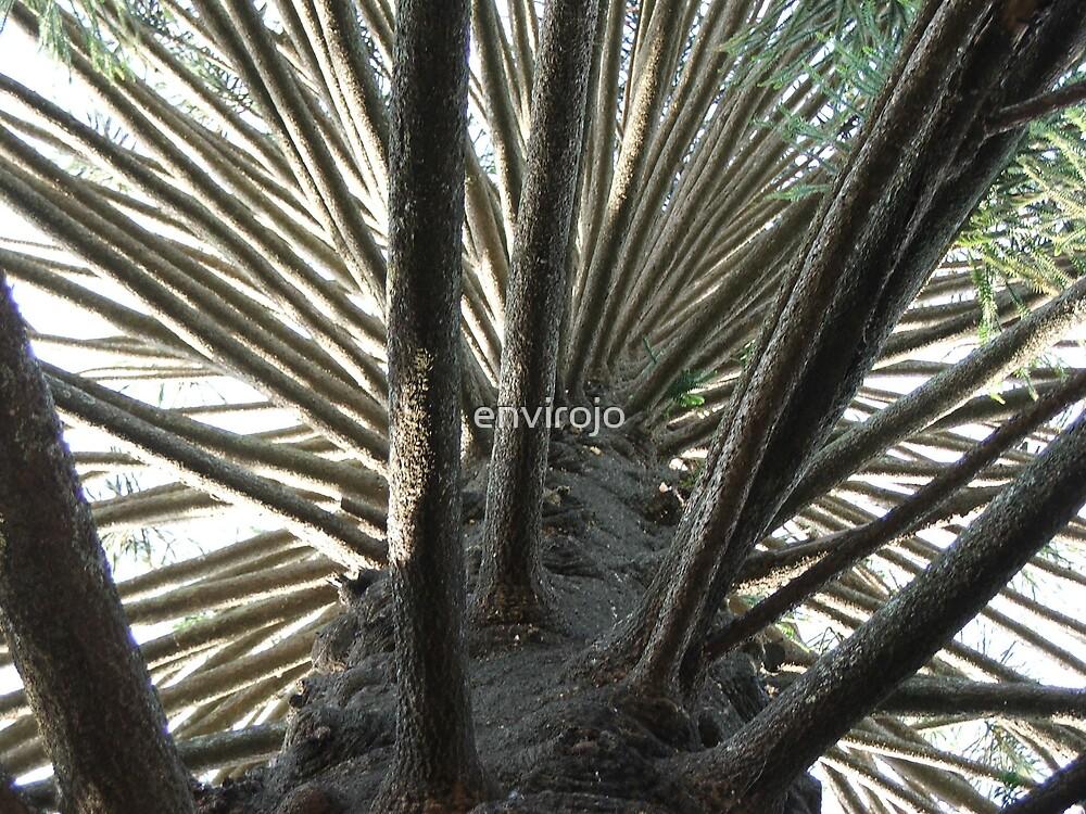 Bunya Bunya Pine by Joanne Byron