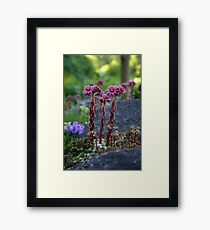 Standing Tall when the World is Small Framed Print