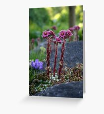 Standing Tall when the World is Small Greeting Card