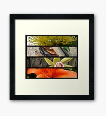 nature Framed Print