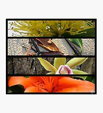 nature Photographic Print