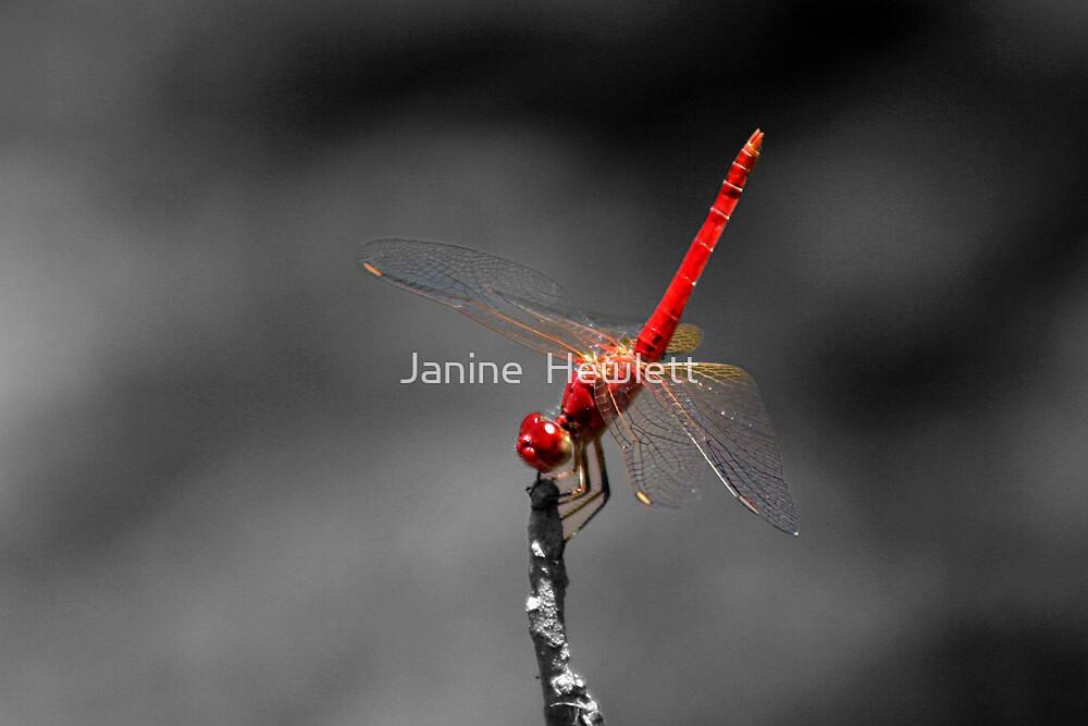 Dragonfly by Janine  Hewlett