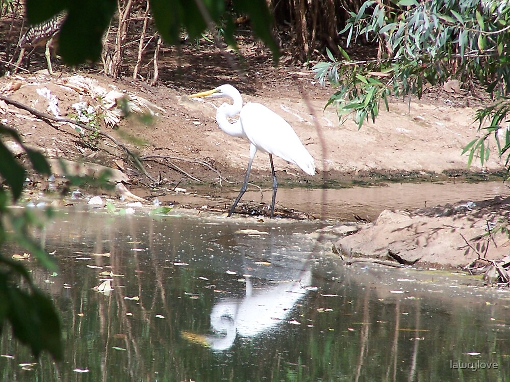 Egret reflection by lawrylove