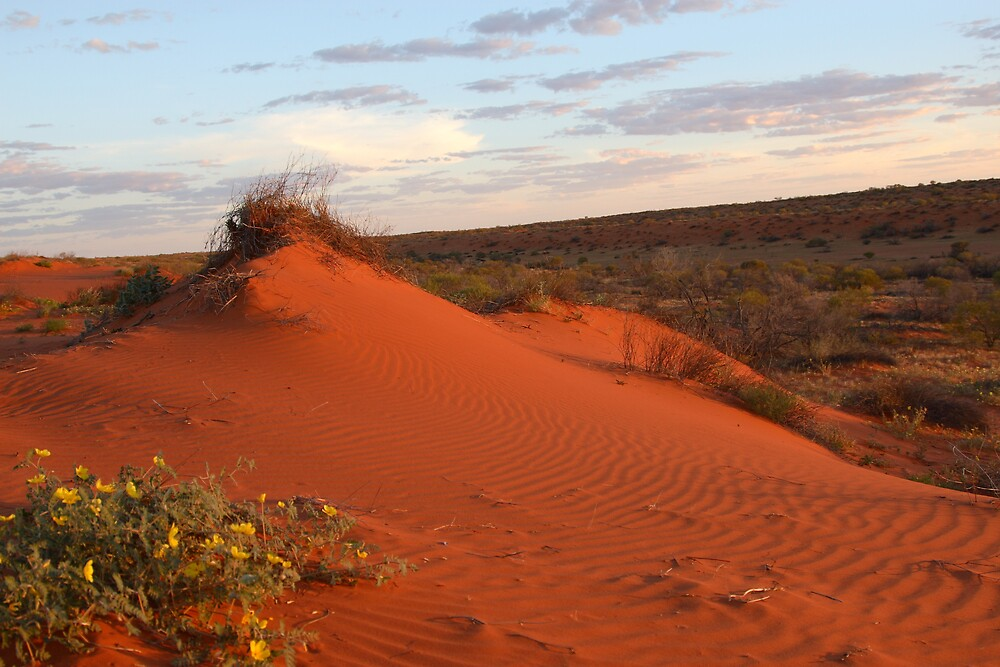 Simpson Desert at Sunset by Renee Driscoll