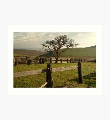 Barrabool Hills Cattle Yard Art Print