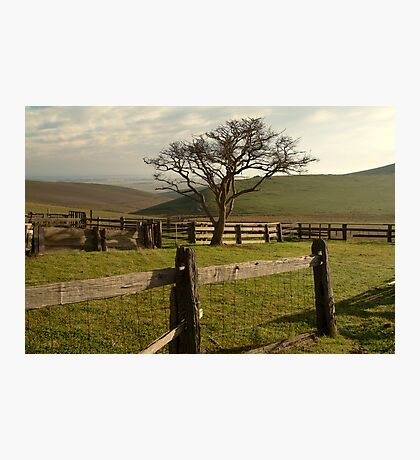 Barrabool Hills Cattle Yard Photographic Print
