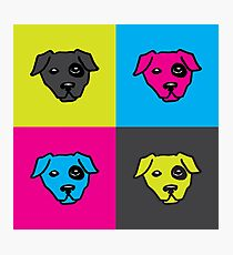 Sour Puppy Photographic Print
