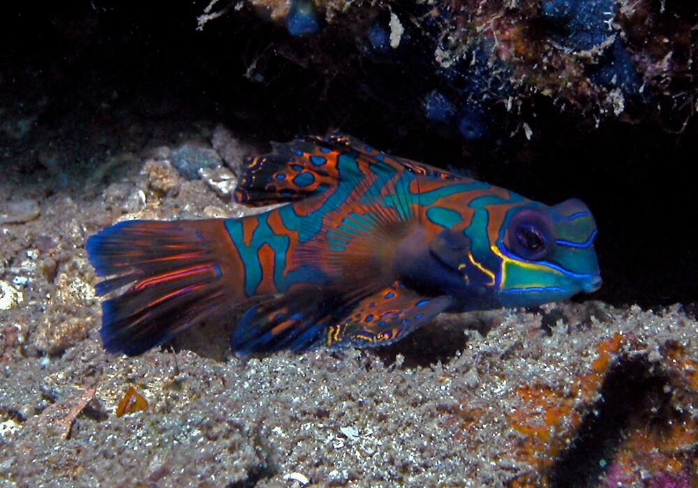 Manderin Fish by Grey