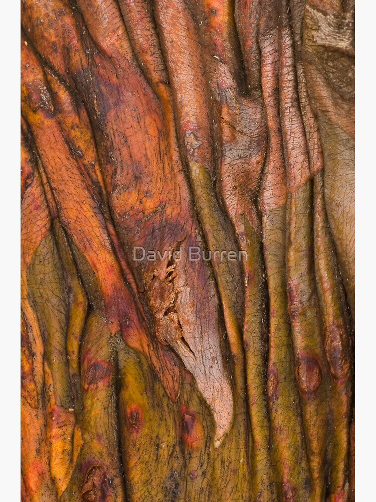 Snowgum patterns by DavidBurren