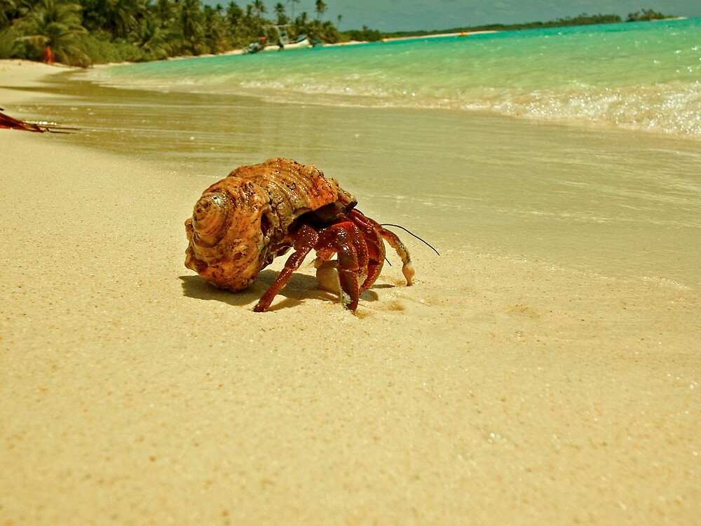 Hermit Crab by Grey
