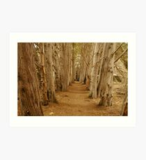Woodland trails Art Print