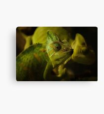 Funny pair of the chameleons. Amusing animal glance Canvas Print