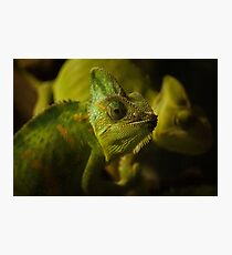 Funny pair of the chameleons. Amusing animal glance Photographic Print