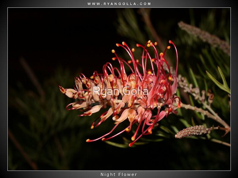 Night Flower by Ryan Golla