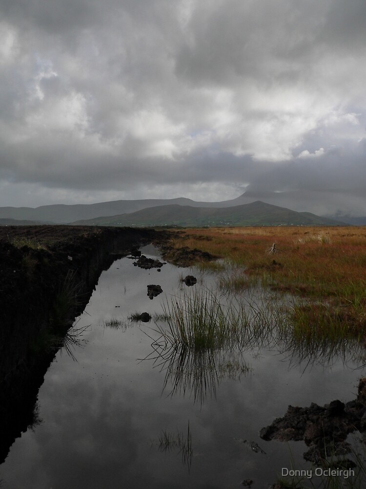 Old waterlogged Irish Bog  by Donny Ocleirgh