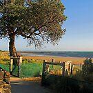 Ricketts Point  -  Beaumaris  -  Victoria  -  Australia by bayside2
