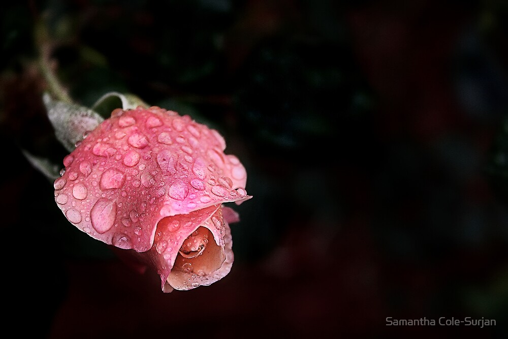 Rain Drenched by Samantha Cole-Surjan