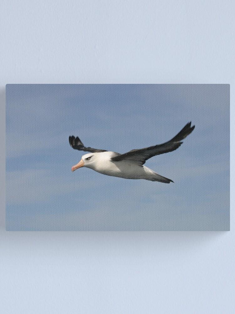 Alternate view of Black-browed Albatross Canvas Print