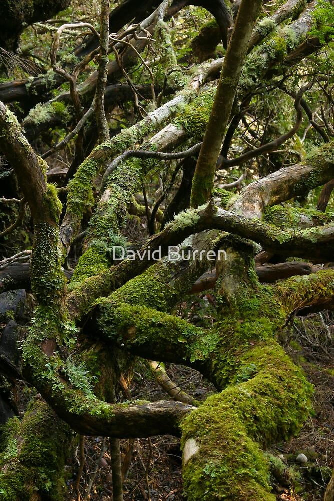Forest jumble by David Burren