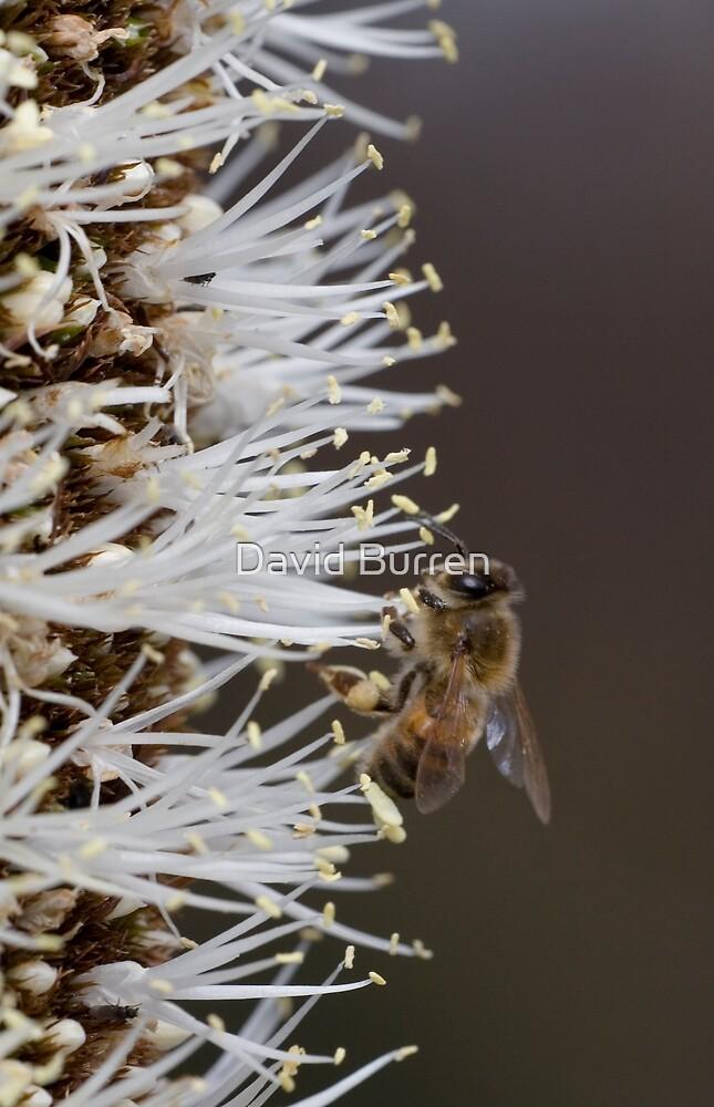 Busy bee by David Burren