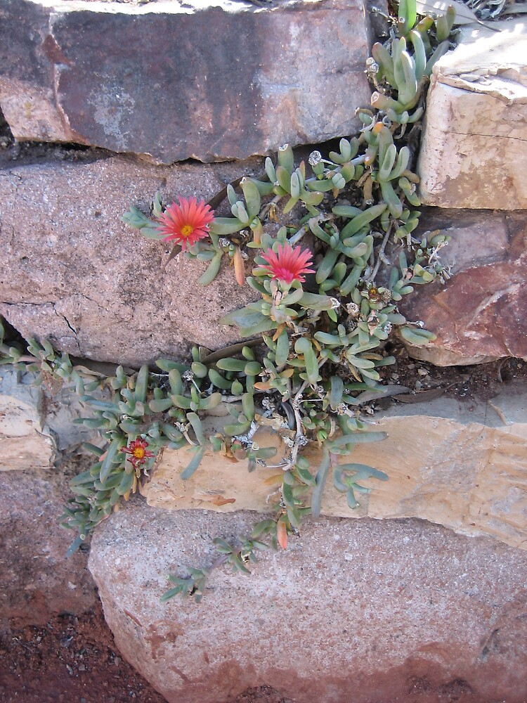 Blooming In Adversity by azcactusd