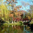 A Walk In The Park by Ellen Woods